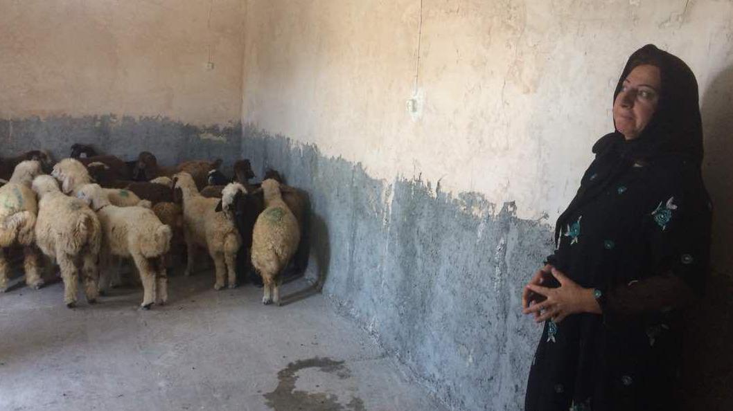 ایجاد 326 فرصت شغلی برای زنان سرپرست خانوار مناطق زلزلهزدهی کرمانشاه